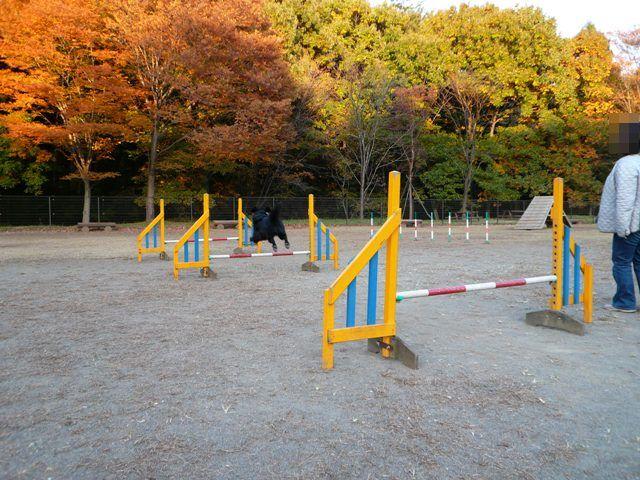 2008 モスミン イルミネーション @ 武蔵丘陵森林公園_c0134862_9591298.jpg