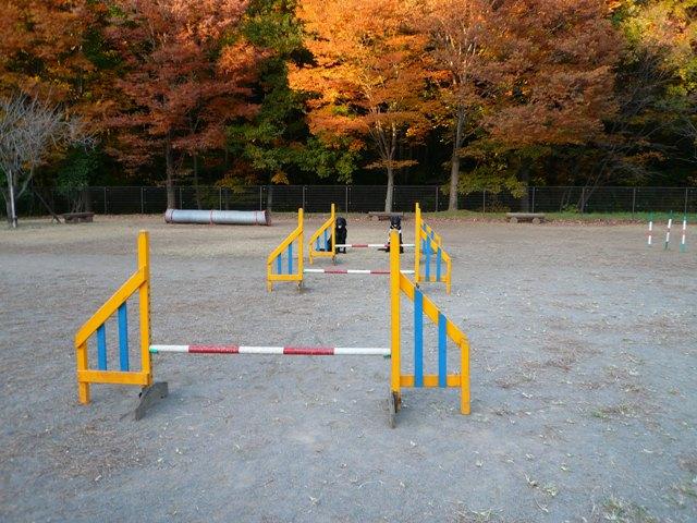 2008 モスミン イルミネーション @ 武蔵丘陵森林公園_c0134862_9593379.jpg