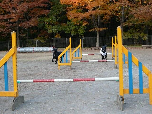 2008 モスミン イルミネーション @ 武蔵丘陵森林公園_c0134862_9595940.jpg