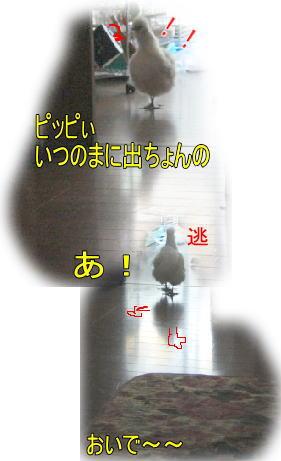 f0082367_13631.jpg