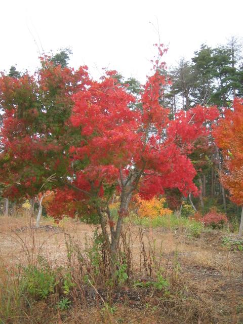 静かに紅葉を楽しみいただけます。_f0085369_2317586.jpg