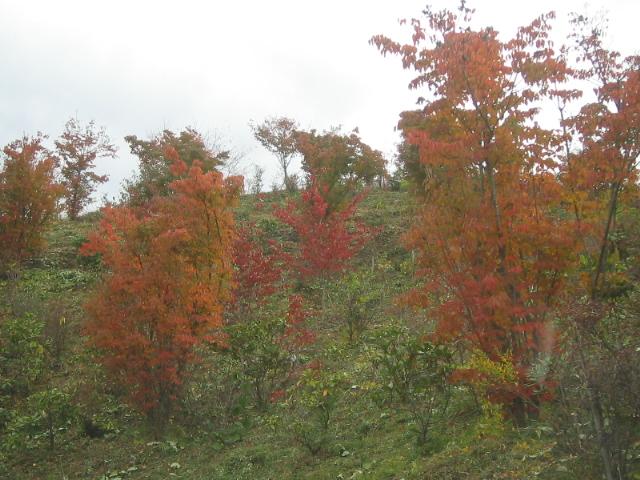 静かに紅葉を楽しみいただけます。_f0085369_23203741.jpg