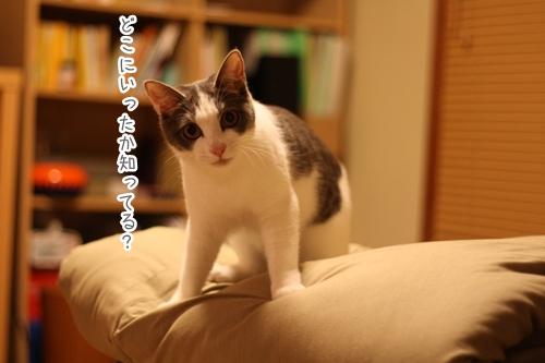 f0184675_231995.jpg