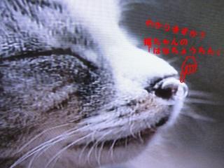 f0175279_21393425.jpg