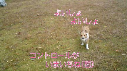 d0041956_002619.jpg