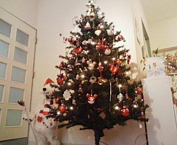 クリスマスツリー_a0047975_16231759.jpg