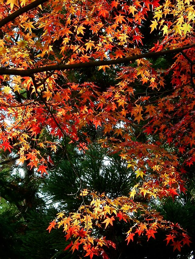 秋の京都旅行_e0022175_23155733.jpg