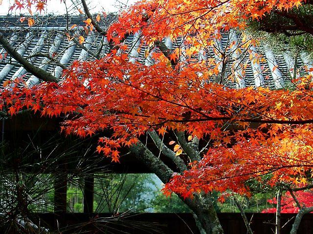 秋の京都旅行_e0022175_23191215.jpg