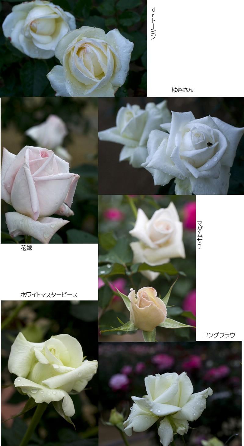 f0093285_17113797.jpg