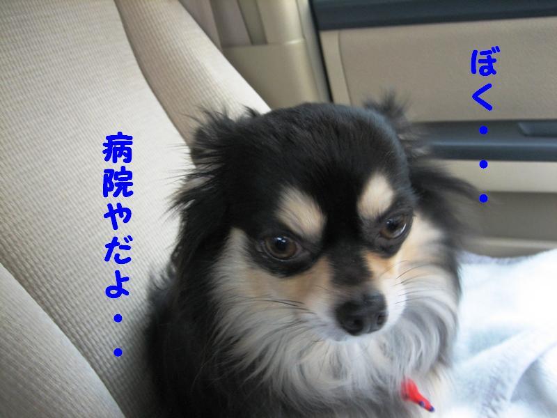 b0150088_7581229.jpg