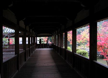 紅葉を訪ねて 清涼寺_e0048413_20241327.jpg
