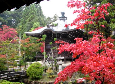 紅葉を訪ねて 清涼寺_e0048413_20244373.jpg
