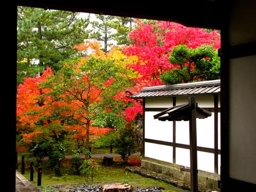 紅葉を訪ねて 清涼寺_e0048413_20245511.jpg