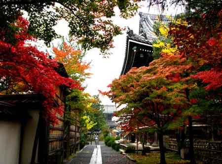 紅葉を訪ねて 清涼寺_e0048413_2025261.jpg