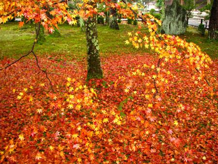 紅葉を訪ねて 清涼寺_e0048413_20254226.jpg