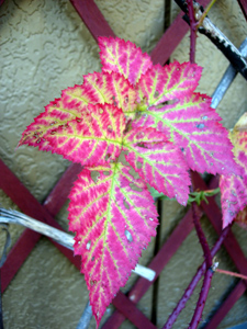 秋もグッと深まりましたね~_e0097534_1664932.jpg
