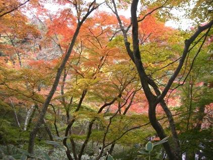 瑞宝寺公園_f0184939_9461393.jpg