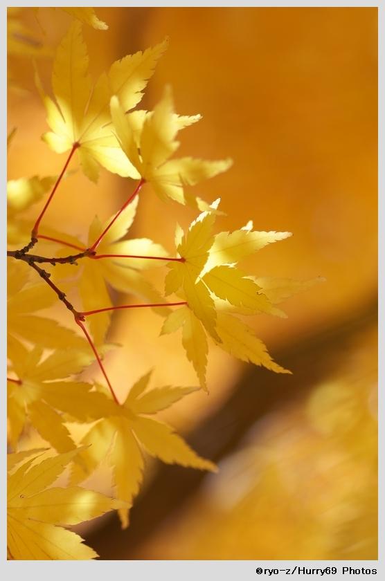 yellow leaf_e0063851_1844764.jpg