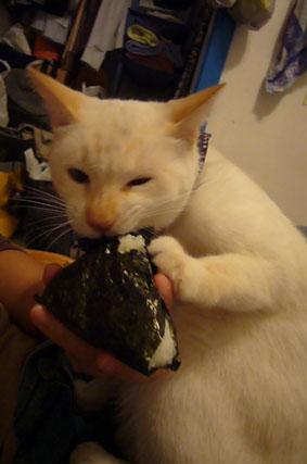 he loves onigiri._c0153966_20294511.jpg