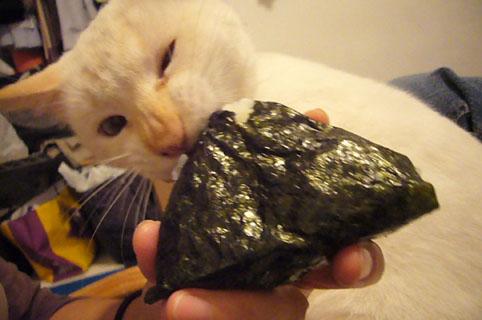 he loves onigiri._c0153966_20304948.jpg