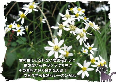 f0137096_11252251.jpg