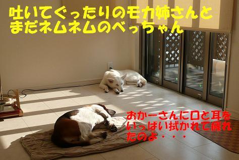 f0121712_1874328.jpg