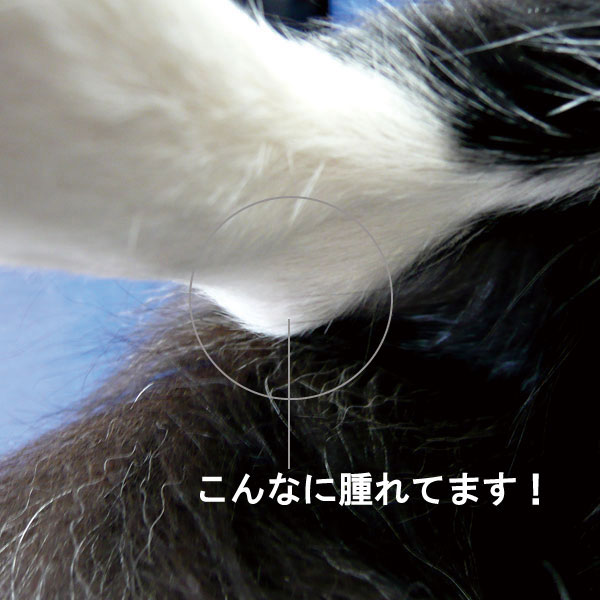 f0174914_2125457.jpg