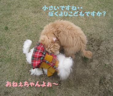 11月9日 ドッグランデビュー_e0136815_7194177.jpg