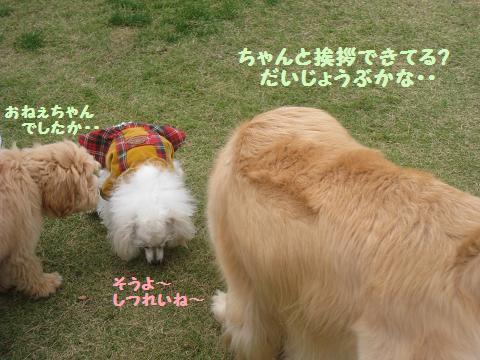 11月9日 ドッグランデビュー_e0136815_7202953.jpg