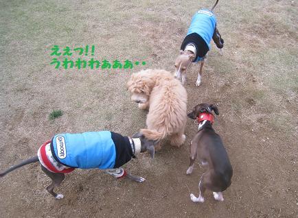11月9日 ドッグランデビュー_e0136815_7234827.jpg