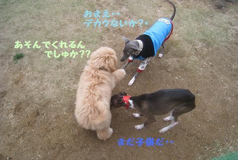 11月9日 ドッグランデビュー_e0136815_723973.jpg