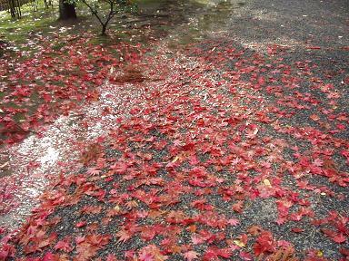 清水園の赤いじゅうたん_e0135219_10152096.jpg