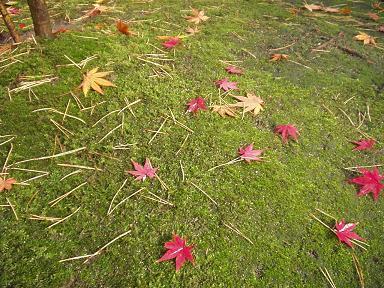 清水園の赤いじゅうたん_e0135219_1082692.jpg