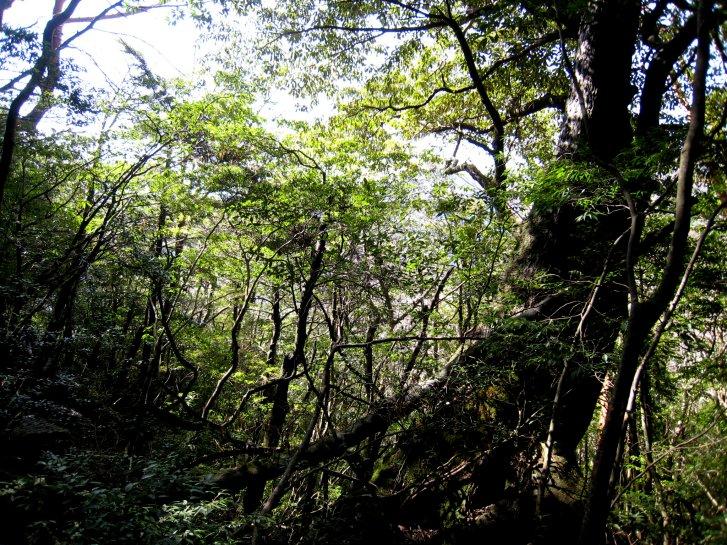 屋久島編(10):大株歩道~森林軌道(08.3)_c0051620_685070.jpg