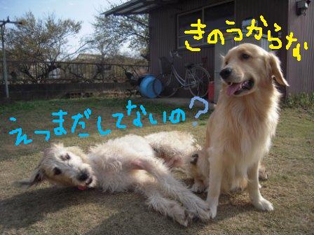 f0176830_14223960.jpg