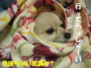 c0179136_2012617.jpg