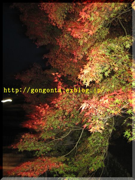 e0085147_1203750.jpg