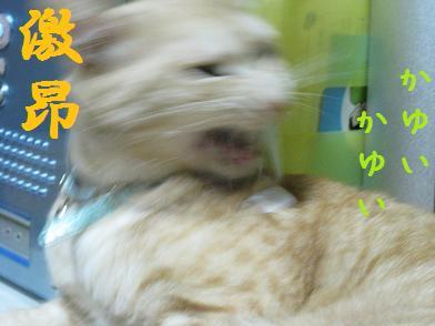 b0151748_1371151.jpg