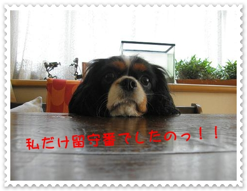 c0145250_20114273.jpg
