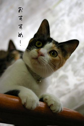 猫に人気のイス_a0064067_14371986.jpg