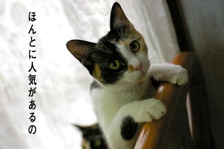 猫に人気のイス_a0064067_14373364.jpg