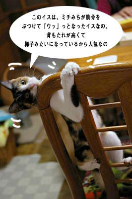 猫に人気のイス_a0064067_14374851.jpg