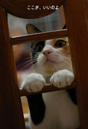 猫に人気のイス_a0064067_14385697.jpg