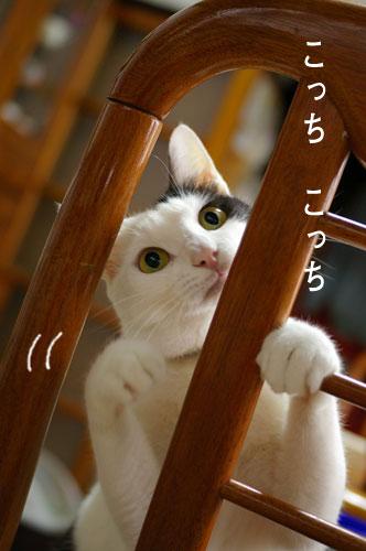 猫に人気のイス_a0064067_14402021.jpg