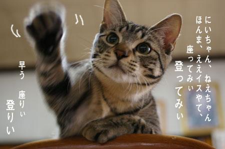 猫に人気のイス_a0064067_15124962.jpg