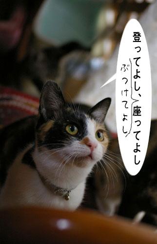 猫に人気のイス_a0064067_15131430.jpg