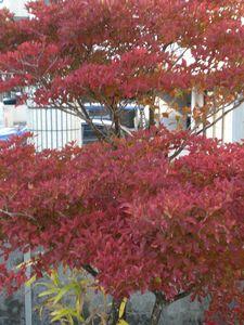 秋から冬へ・・・_b0150576_1241626.jpg