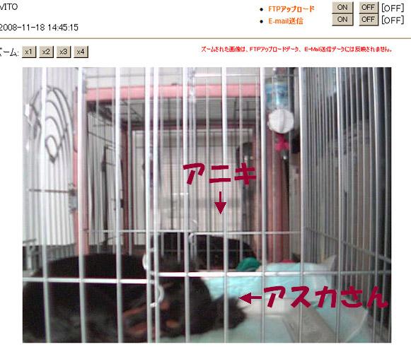 f0162078_1511659.jpg