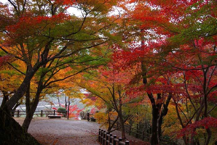 三次市尾関山公園の紅葉_f0130879_23181640.jpg