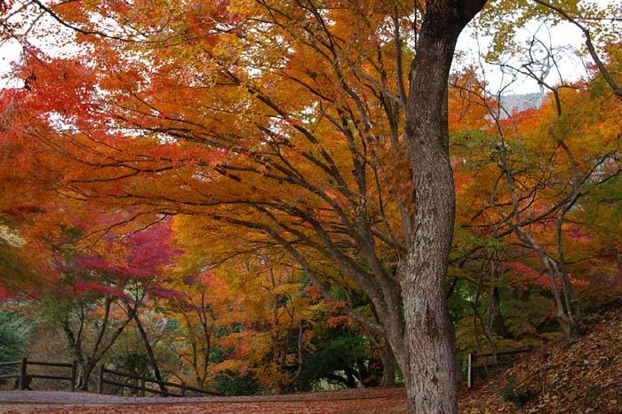 三次市尾関山公園の紅葉_f0130879_2318687.jpg